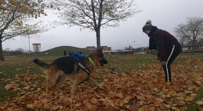 Hundvakt finns i Norrtälje, hundvakt nära Norrtälje