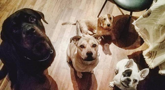Soggiorno o passeggiate con educatore cinofilo, dog sitter a Firenze