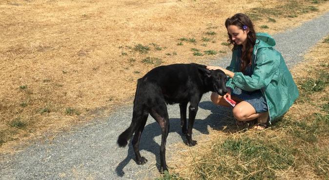 Pet-sitter: quattro passi in compagnia!, dog sitter a Lallio