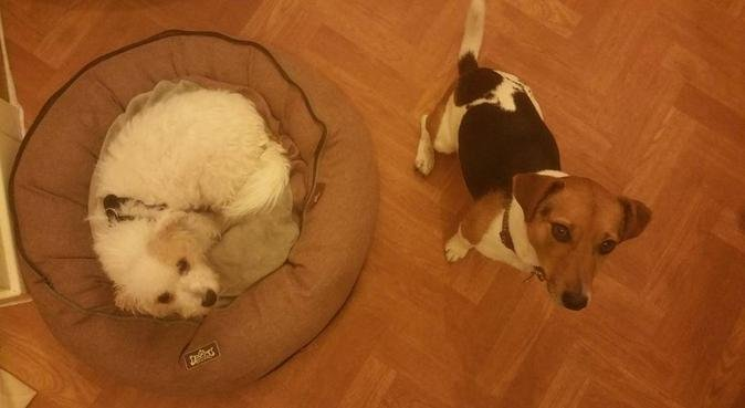 Cozy home for any dog - any shape and size :), dog sitter in Edinburgh