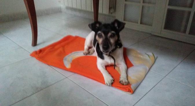 Amante degli animali, dog sitter a milano