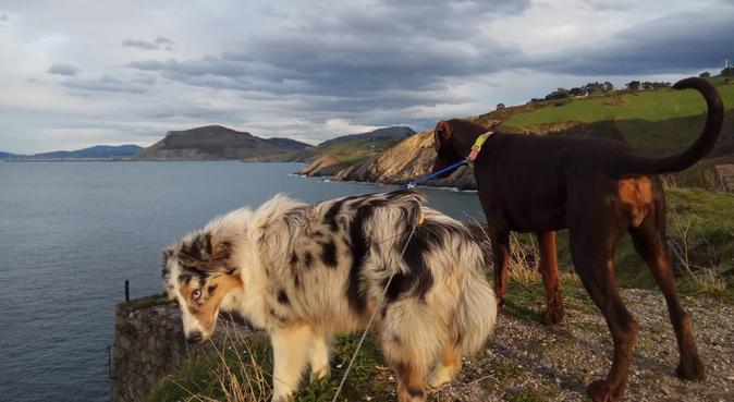 Paraíso para los perros en la playa y montaña., canguro en Zierbana