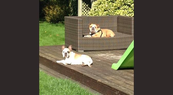 We love dogs!!! For all your dog needs click here!, dog sitter in Hoddesdon