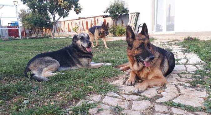 Casa Guapo... come a casa propria !!!, dog sitter a Modugno