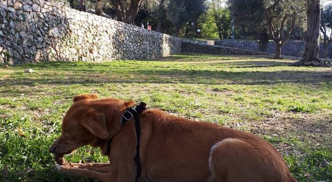 Petsitting Nice, dog sitter à Nice