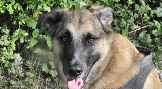 De vraies vacances pour tout le monde, dog sitter à Montigny-lès-metz