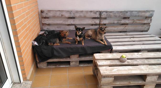 Paraíso perruno, alojamiento y cuidado de mascotas, canguro en Benimamet