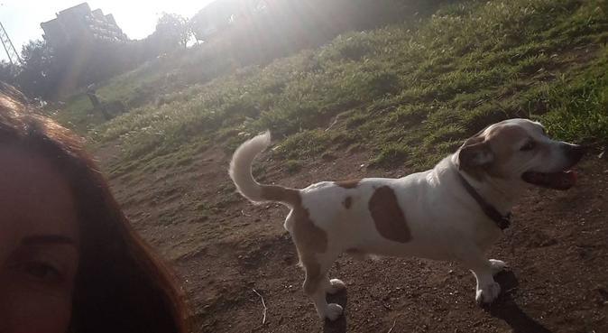 Dog Sitter A Casa mia🐶, dog sitter a Fonte Nuova, RM, Italia