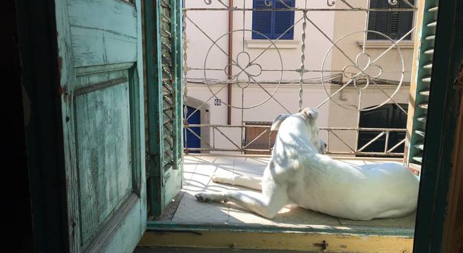 Vamos a cuidarlo con mucho amor y cariño!, canguro en El Masnou