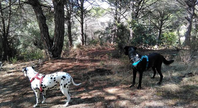 Las mejores vacaciones para tu mascota, canguro en Sant Andreu de Llavaneres