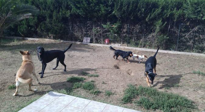Un foyer à quatre pattes !, dog sitter à Aucamville