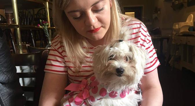 Beautiful long walks on the Braid hills and beyond, dog sitter in Edinburgh