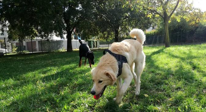 Esperienza, preparazione e amore per i vostri cani, dog sitter a Verona