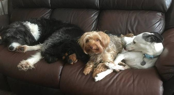 Dog heaven in Hasland, dog sitter in Chesterfield