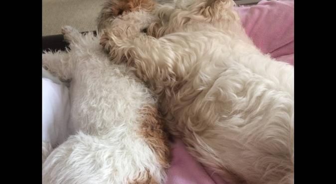 Pup's Holiday Pad, dog sitter in Edinburgh