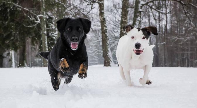 Aktiv och kärleksfull hundpassning i Växjö, hundvakt nära Växjö