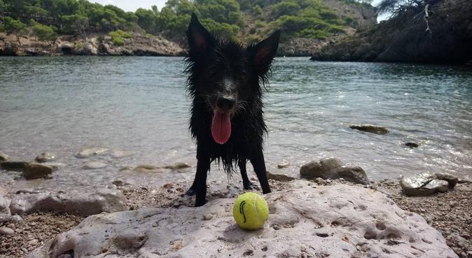 Ellos también necesitan vacaciones, canguro en Palma de Mallorca, España
