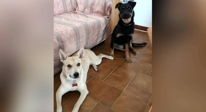 Occhi attenti, tante coccole e passeggiate!, dog sitter a Valenzano