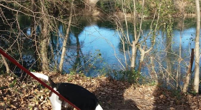 Un coin de calme au coeur de la ville, dog sitter à Montpellier