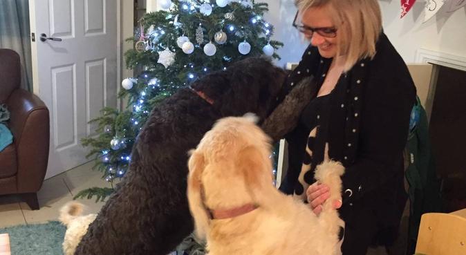 The Doggy Warren 🐾, dog sitter in Cardiff