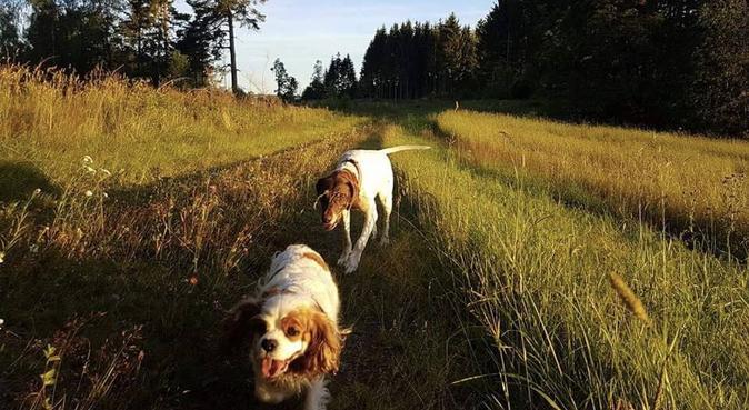 Student med fri på dagtid ønsker en kose/turvenn!, hundepassere i Undrumsdal