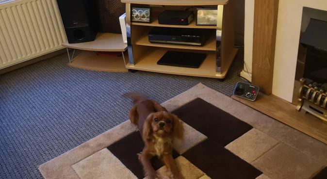 Dogs Adored (Birmingham), dog sitter in Birmingham