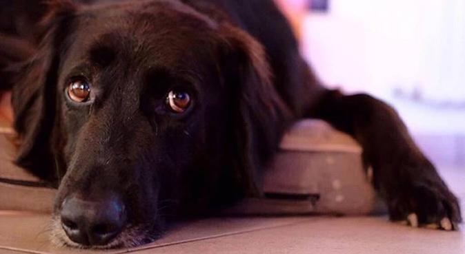 Giochi e passeggiate per gli amici a quattro zampe, dog sitter a Venezia