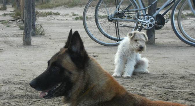 Tendrá todo mi cariño,largos y hermosos  paseos., dog sitter à Sant Pere Pescador