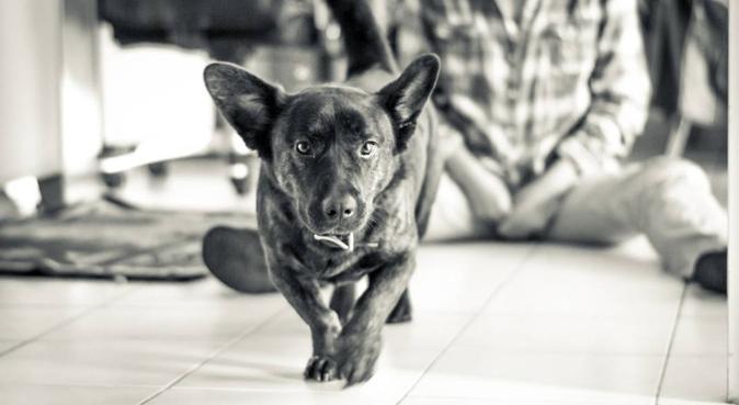 Grandissant avec des chiens, dog sitter à Lyon