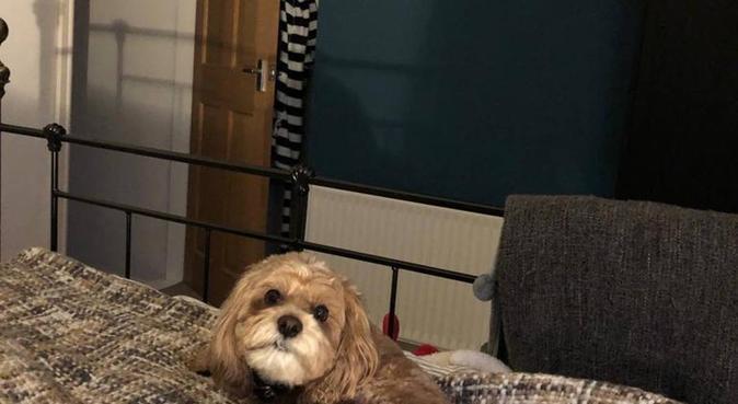 Flexible dog sitting in Swindon!, dog sitter in Swindon