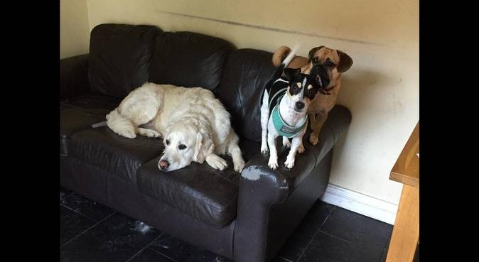 Carls K9 Cabin Mobile Dog Grooming & Home Boarding, dog sitter in Cardiff