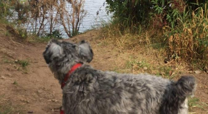 Home full time for loving doggy care, dog sitter in Lincoln