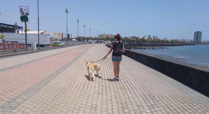 ¡Tu perro siempre contento! Uno más de la familia, canguro en Arrecife