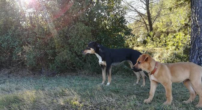 Balade de toutous en forêt, dog sitter à MONTPELLIER