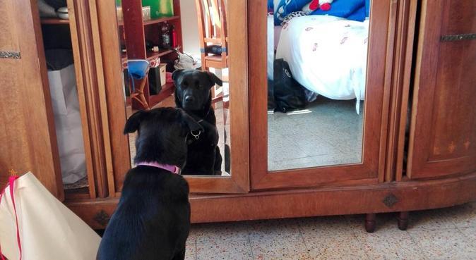 Un amore a quattro zampe! Coccole e divertimento ❤, dog sitter a Florence