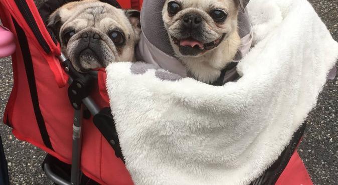coccole e passeggiate per i vs amici a 4 zampe 🐶, dog sitter a Florence