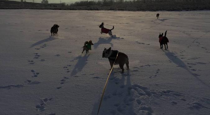 Cullingworth Pooches Playground, dog sitter in Bradford