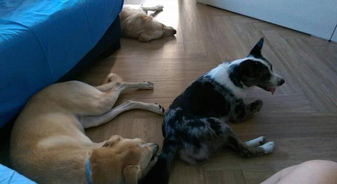 Super DogSitter!!!, dog sitter a Genoa
