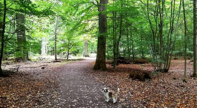 Erfaren och harmonisk hundpassning i Hbg, hundvakt nära Helsingborg