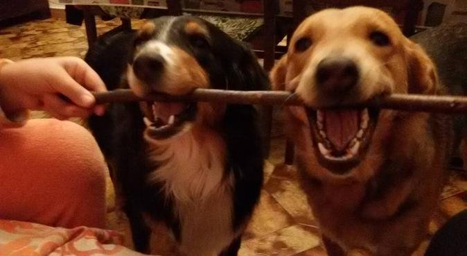 In  campagna:coccole e divertimento assicurati!!!!, dog sitter a genova