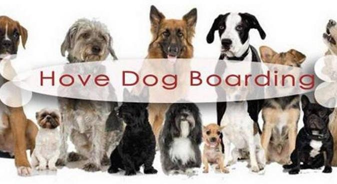 Hove Dog Boarding, dog sitter in Hove
