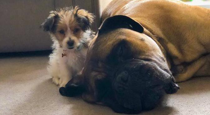 Jess Pets, dog sitter in Swindon