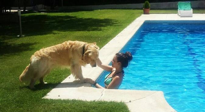 ¡Los paseos más chulos para tu perro!, canguro en Alcobendas