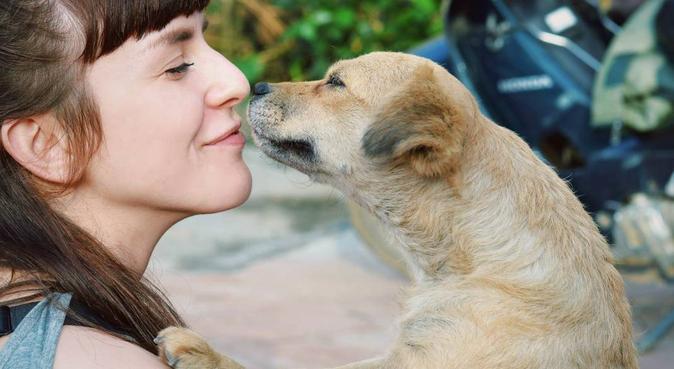 Gladis som vill umgås med djuris, hundvakt nära Uppsala