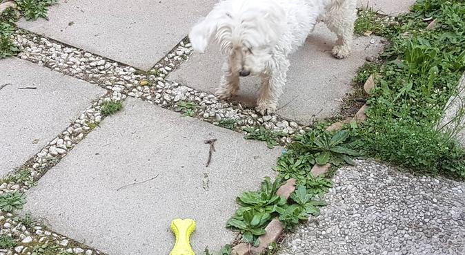 Amore coccole  e  attenzione, dog sitter a Milano