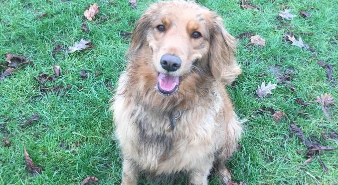 Happy walks & Cuddled Dogs, dog sitter in London