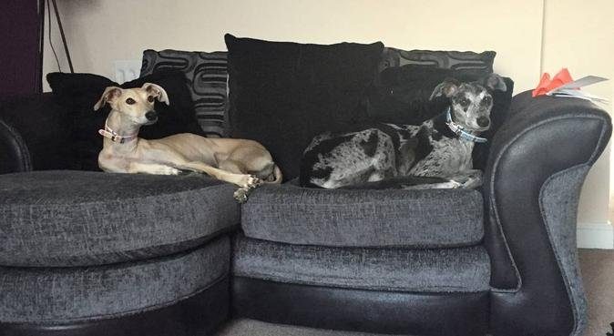 Family ready to give your dog love & attention, dog sitter in Leeds