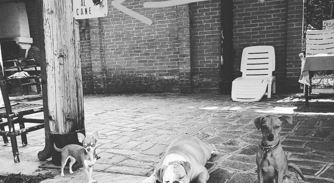 Amante dei cani, dog sitter a Milano