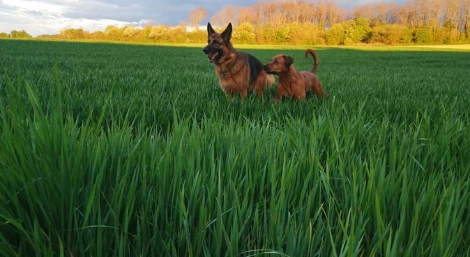 La colo des chiens, dog sitter à Caluire-et-Cuire, France