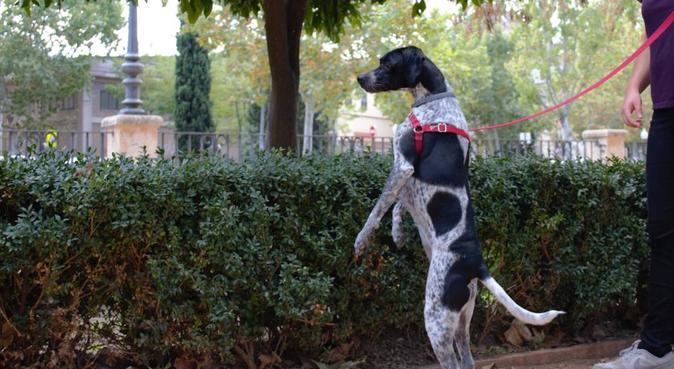 Pisito con patio para tu perro o gato, canguro en Granada